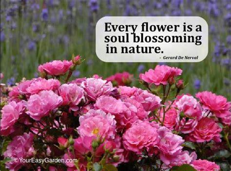 flower garden quotes favorite garden and nature quotes your easy garden