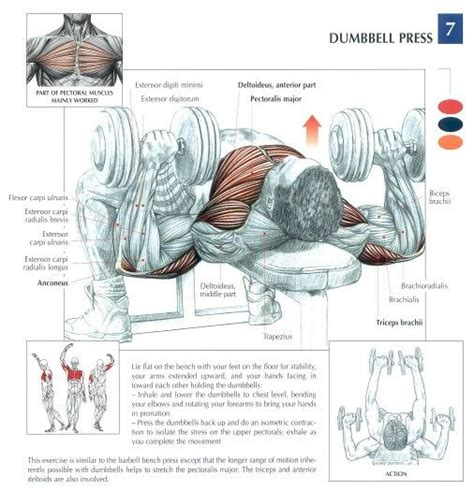 bench press works what muscles dumbbell flat bench press peak fat loss and fitness