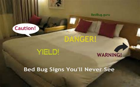 bed bug signs signs of bed bugs got bed bugs