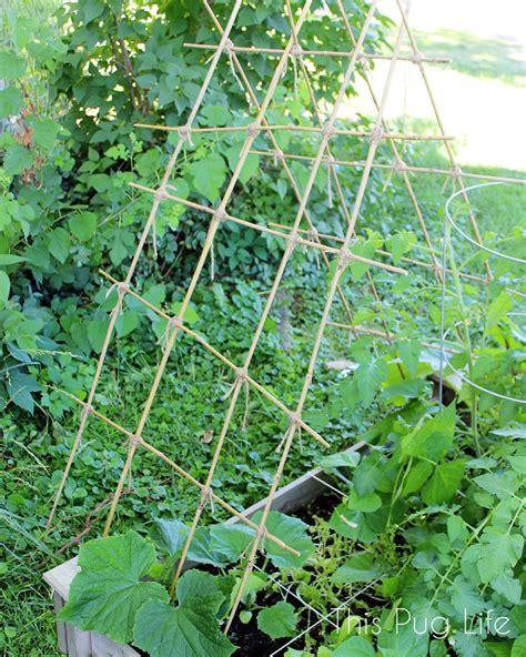 Bamboo Trellis Bamboo Cucumber Trellis Www Imgkid The Image Kid