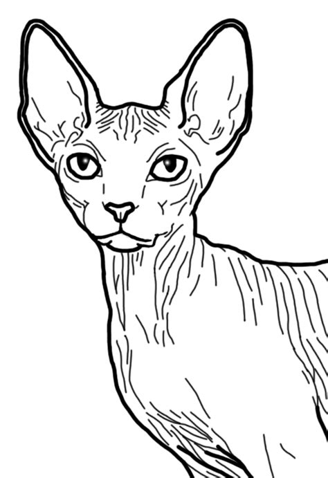 hairless cat coloring page sphynx base 4 by vire dragon on deviantart