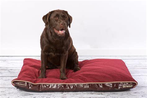 materasso per cani letto per cani ad ognuno il suo