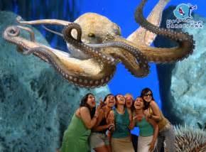 l aquarium excursi 243 n un d 237 a en el aquarium de barcelona visita a un