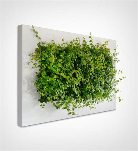 Vertikaler Garten Echte Pflanzen by Livepicture Pflanzenbild Im Greenbop Shop Kaufen