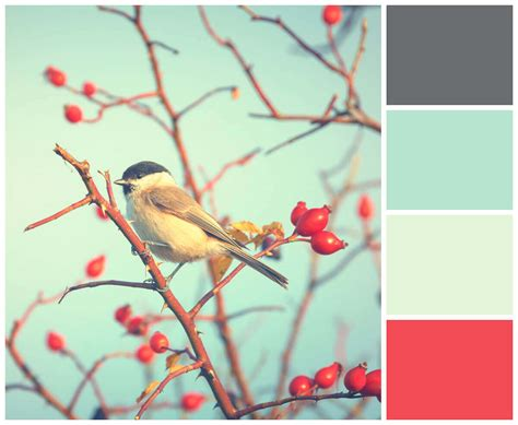 color scheme from image create a color palette picmonkey