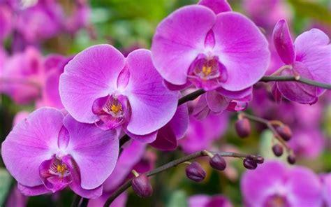 immagini fiori tropicali scarica sfondi fiori tropicali bellissimi fiori orchidee