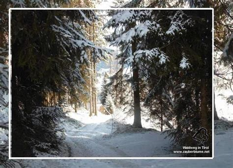 Insel Mainau Im Winter 3489 by Insel Mainau Im Winter Insel Mainau Im Winter Bodensee