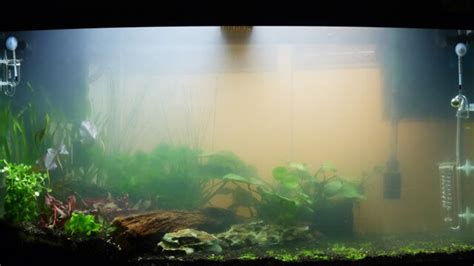 fish aquarium water algone