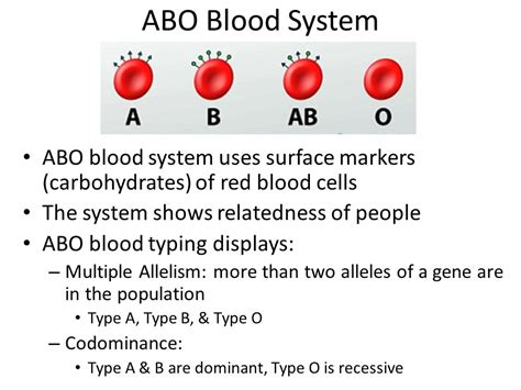 blood type o carbohydrates chapter ppt