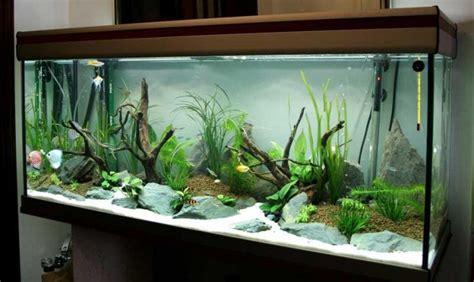 Aquarium Dekorieren Ideen by Aquarium Ideen 108 Designs Zum Integrieren In Der Wohnung