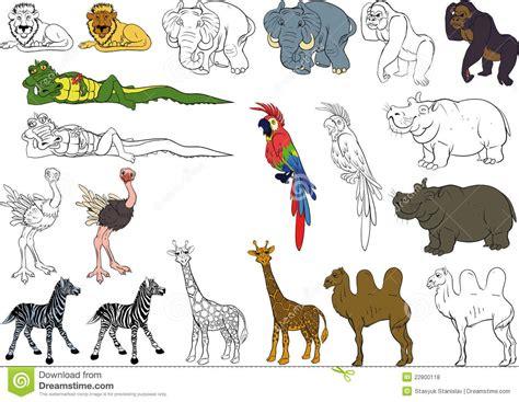 imagenes animales africanos conjunto de animales africanos fotos de archivo libres de