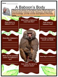 baboon facts worksheets habitat behaviour life cycle diet  kids