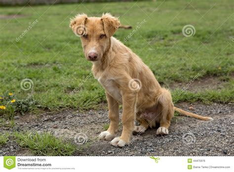 what is a mutt mutt stock photo image of stray animal canine mexico 44475976