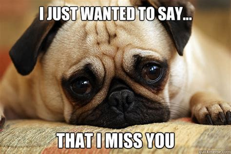 pug i you i just wanted to say that i miss you sad pug quickmeme