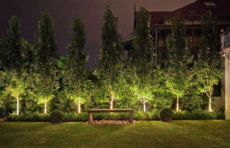 outdoor tree lights australia ornamental pear trees driveway pinterest gardens