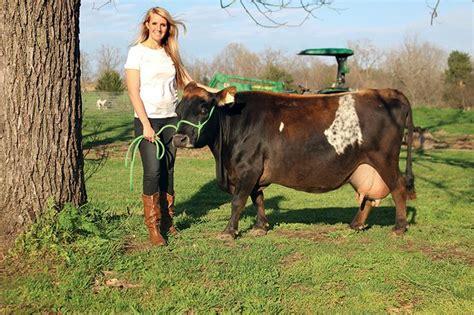 Backyard Miniature Herefords by Best 20 Miniature Cattle Ideas On Miniature