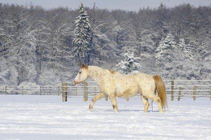 pferd eindecken ab wann ab wann z 228 hlt ein pferd eigentlich als senior