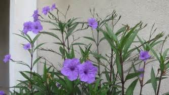 plant with purple flowers can someone please help me identify a tall plant that has