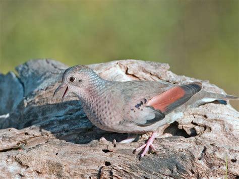 the life of sweet birds doves birds
