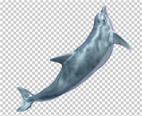 imagenes sin fondo blanco como se llaman клипарт дельфин для фотошоп в psd и png без фона