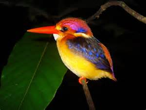 colorful bird croxfiber sportfishos lounge kingfisher