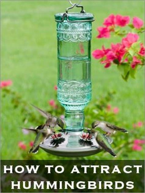 how to feed attract hummingbirds garden design pinterest