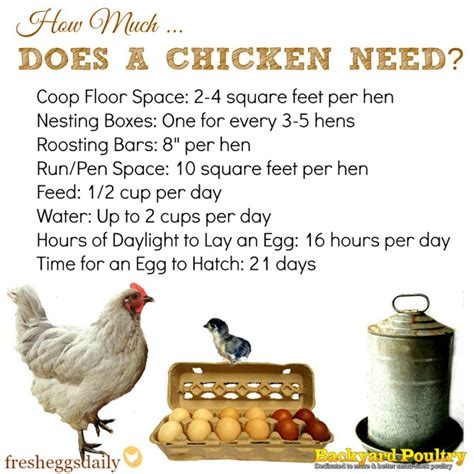 how much space feed water light does a chicken