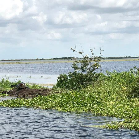 airboat vero beach florida florida airboat excursions vero beach updated 2018 top