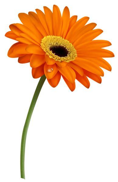 pin  ramesh patil  jay gerber daisies daisy