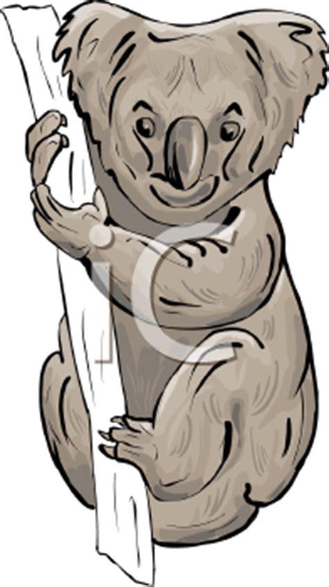 Royalty Free Koala Clipart