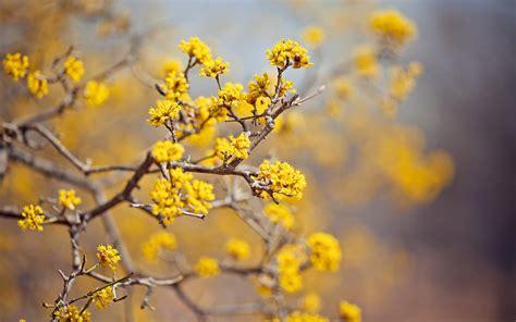 desktop wallpaper hd yellow yellow flowers wallpaper 46539 1920x1200 px hdwallsource com