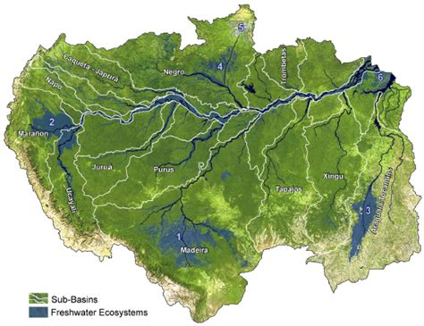 amazon basin amazon river ecosystems being rapidly degraded but remain