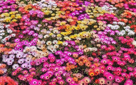 imagenes de jardines de rosas de colores naturaleza flores jard 237 n p 233 talos colores plantas
