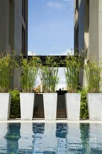 potted plants by swimming pool photograph by don mason