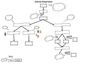 cellular respiration flowchart cellular respiration diagram key gallery how to guide