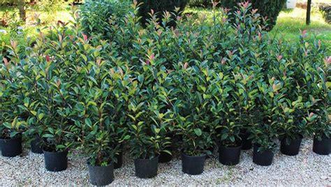 vendita online piante piante vendita online fiorista piante acquistabili online