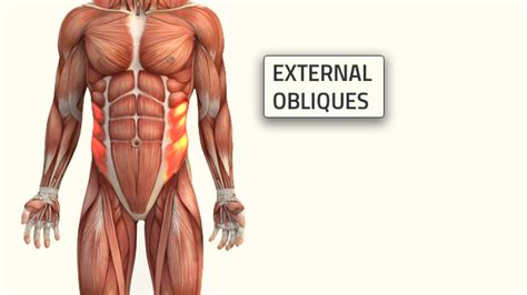 3 oblique workouts that build a strong and ripped stack