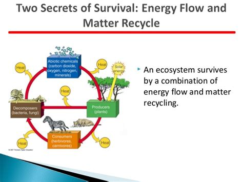 pattern of energy and matter flow biogeochemical cycle and impact of anthropogenic activity