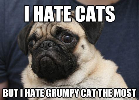 cat pug grumpy pug memes quickmeme