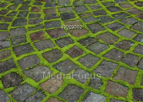 How To Clean Moss Patio by Pin By June Collins On Garden Stuff