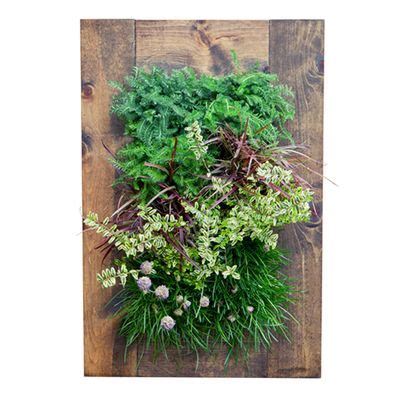 Bright Green Living Wall Planter by 1000 Images About Grow Things On Indoor Water