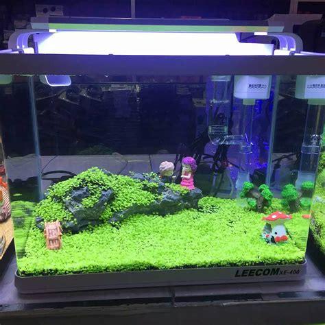 semi erba giardino verde acquario vasca dei pesci semi acquatiche acqua erba