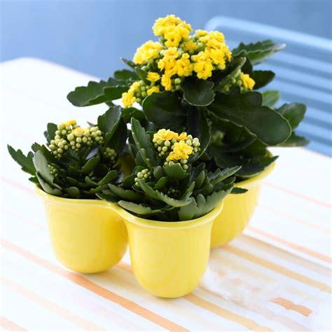 fiori d appartamento fiori e piante piante appartamento scegliere piante e