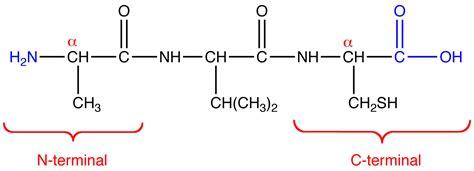 protein n terminus n terminal ochempal