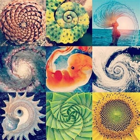 patterns in nature elementary math 241 best images about sacred geometry symbols on