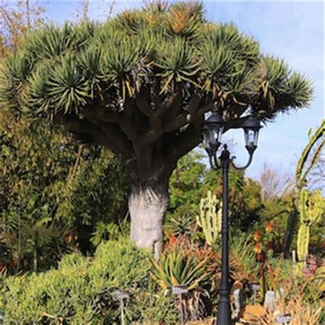 San Diego Botanical Gardens Coupon Save At Southern California S Family And Cultural Attractions With Coupons From Couponsforfun