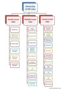 human resource management hr hierarchy structure