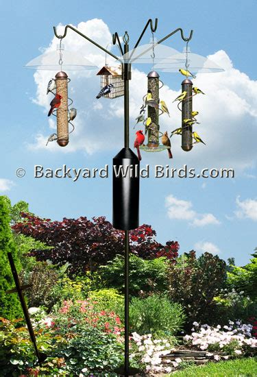 bird feeder s pole squirrel proof system at backyard wild