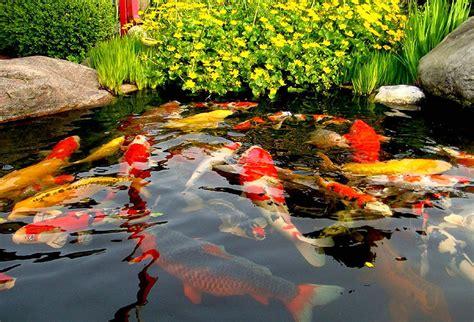 Klares Wasser Im Teich 1420 by Erste Hilfe Seite Happykoi