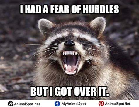 Bad Pun Raccoon Meme - raccoon memes